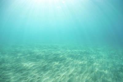 Undersea Photograph - Serene Sea by M Sweet