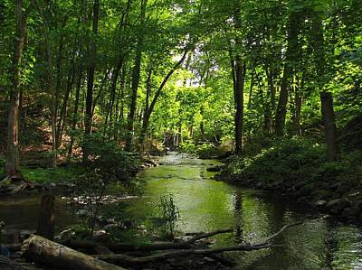 Photograph - Serene Stream by RobLew Photography