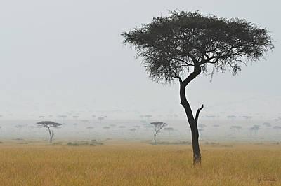 Photograph - Serengeti Acacia In The Mist by Joe Bonita