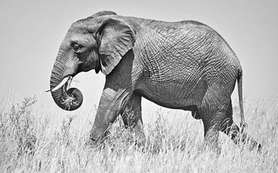 Serengeti Elephant Print by Richard Matthews