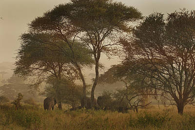 Photograph - Serengeti Wanderers by Joseph G Holland