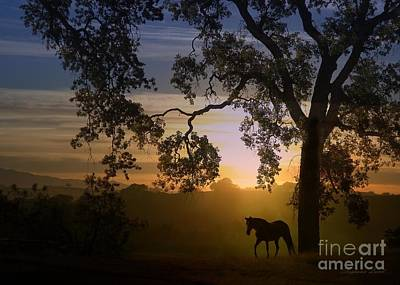 Paso Fino Photograph - Serenity At Sunrise by Stephanie Laird