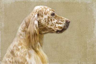 Dog Portrait Photograph - Setter 2 by Rebecca Cozart