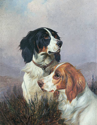 Dog Painting - Setters On A Moor by Colin Graeme