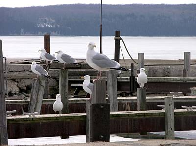 Photograph - Seven Gulls by Keith Stokes