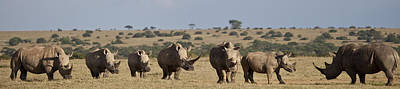 Rhinoceros Photograph - Seven White Rhinos Line Up In Solio by Robin Moore