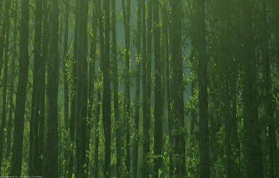 Art Print featuring the photograph Seward Woods by Michael Nowotny
