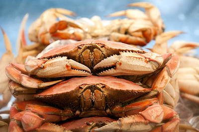 Photograph - Sfo Seafood - Crabs by Gary Rose