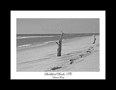 East Coast Photograph - Shackleford Banks Ancient Forest  by Betsy Knapp
