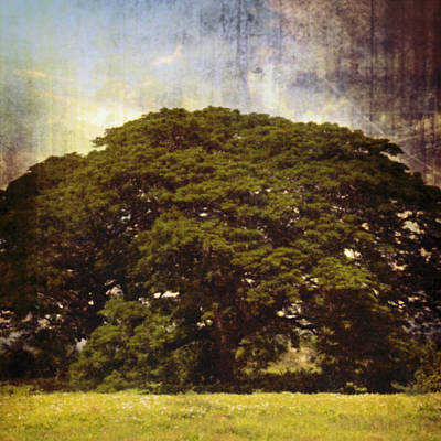 Antique Maps - Giant Shade Tree by Skip Nall