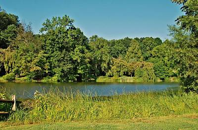 Photograph - Shades Of Green - Holmdel Park by Angie Tirado