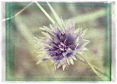 Photograph - Shades Of Purple by Julie Williams