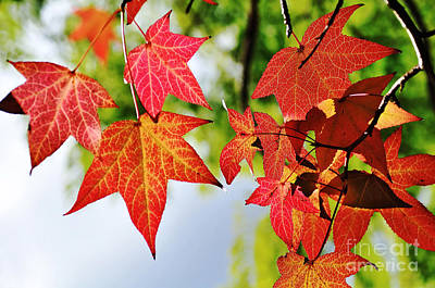 Photograph - Shades Of Red by Kaye Menner