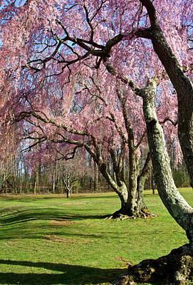 Photograph - Shades Of Spring by Byron Varvarigos