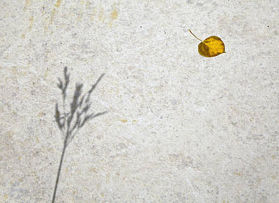 Photograph - Shadow And A Leaf by James Steele