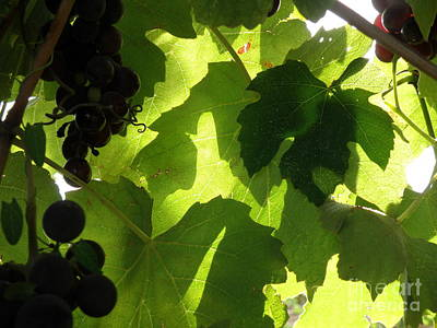 Art Print featuring the photograph Shadow Dancing Grapes by Lainie Wrightson