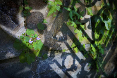 Art Print featuring the photograph Shadow Garden by Richard Piper