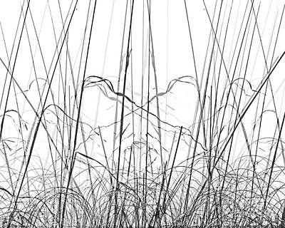 Digital Art - Shadow Grasses by Lizi Beard-Ward