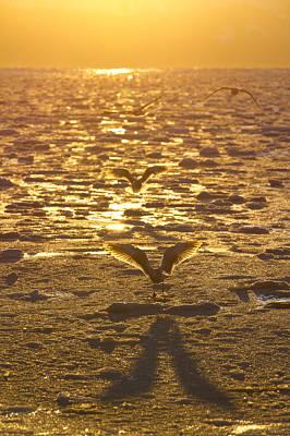 Shadow Of A Gull Art Print by Tim Grams