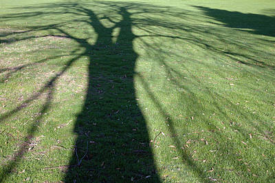 Photograph - Shadow Of A Tree On Green Grass by Matthias Hauser