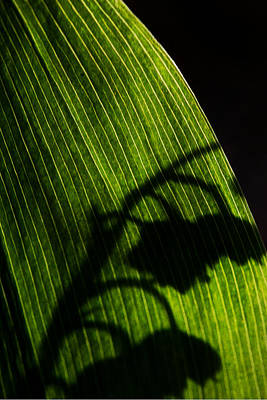 Photograph - Shadow Of The Valley by Lisa Knechtel