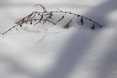 Shadow On Snow 2 Art Print by Tad Kanazaki