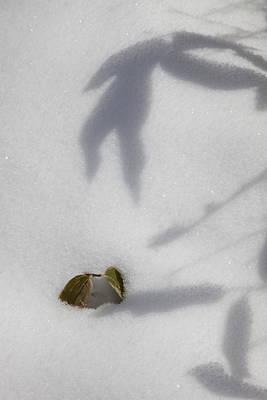Shadow On Snow Art Print by Tad Kanazaki