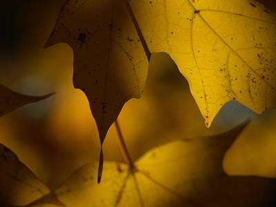 Fall Leaves Photograph - Shadows And Light by Allan Wrona