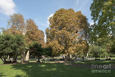 Photograph - Shadows Of Parc Monceau by Fabrizio Ruggeri