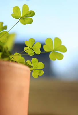 Photograph - Shamrock Pot by Emanuel Tanjala