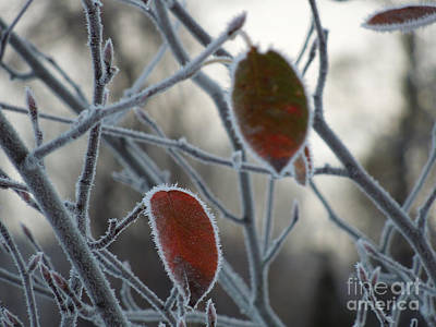 Shards Of Frost Art Print by Linda Seacord