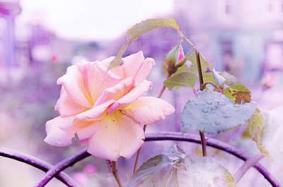 She Like The Ghost Beside Me. Scottish Rose Art Print by Jenny Rainbow