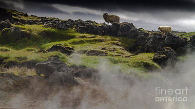 Photograph - Sheep Above Sulphur Springs by Michael Canning