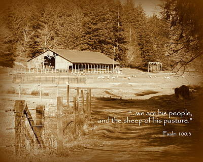 Photograph - Sheep Grazing By Barn Scripture by Cindy Wright