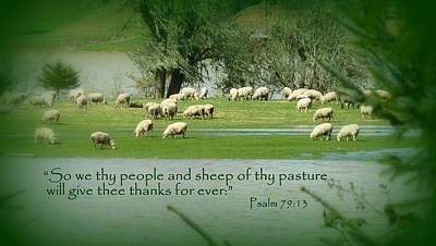 Inspirational Photograph - Sheep Grazing Scripture Art by Cindy Wright