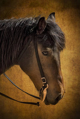 Photograph - Sheep Herding Horse Portrait by Susan Candelario