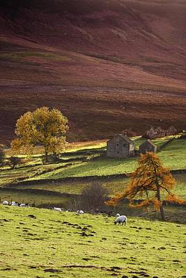 Keith Richards - Sheep On A Hill, North Yorkshire by John Short