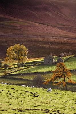 Sheep On A Hill, North Yorkshire Art Print by John Short