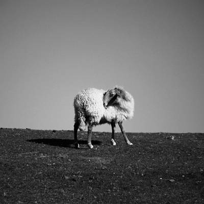 Sheep On Mountain Art Print