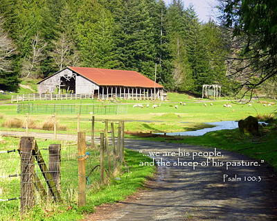 Photograph - Sheep Scripture Art For Mick by Cindy Wright