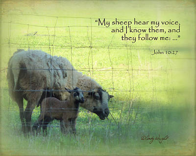 Photograph - Sheep Scripture John 10 by Cindy Wright