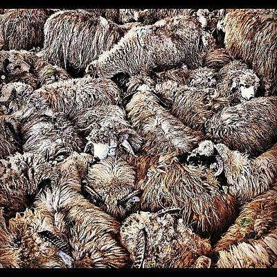 Sheep Photograph - Sheeps Everywhere by Styledeouf ®