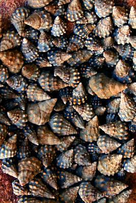 Photograph - Shell Cluster  Koh Kut Thailand by Jennifer Bright