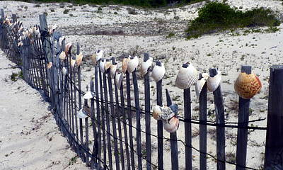 Photograph - Shell-decorated Fence by Carla Parris
