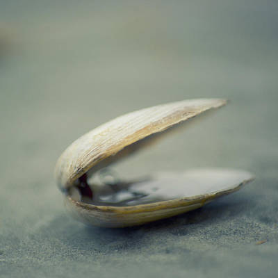 Shell Art Print by Jill Ferry Photography