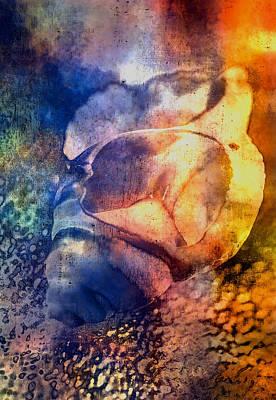 Shell Art Print by Mauro Celotti