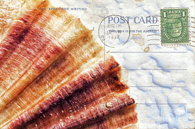 Photograph - Shell Postcard by Silvia Ganora