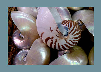 Photograph - Shells - 1 by Carla Parris