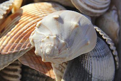 Shells 2 Art Print by Mike McGlothlen