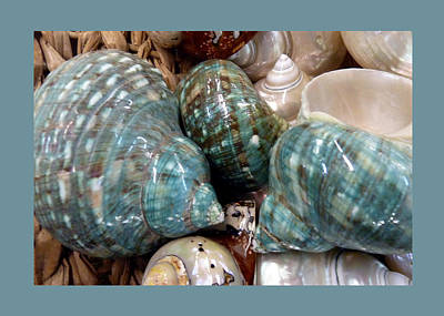 Photograph - Shells -3 by Carla Parris